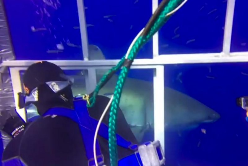 Sharks are beautiful, says Hong Kong diver despite narrow escape