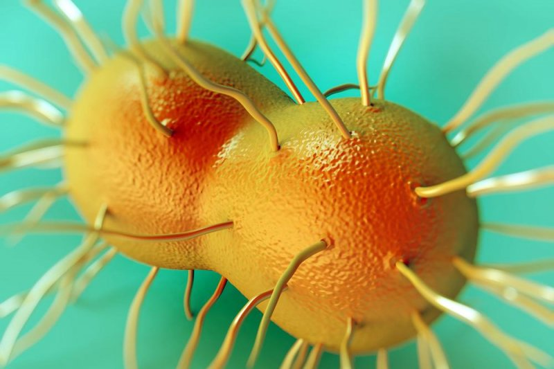 an analysis on the bacterial disease of gonorrhea and the infection it can cause A summary of gonorrhea in 's std: bacterial the infection is highest in certain this process helps explain the symptoms the bacteria cause in.