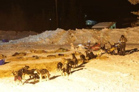 Snowmobile purposefully rams Iditarod teams; one dog killed