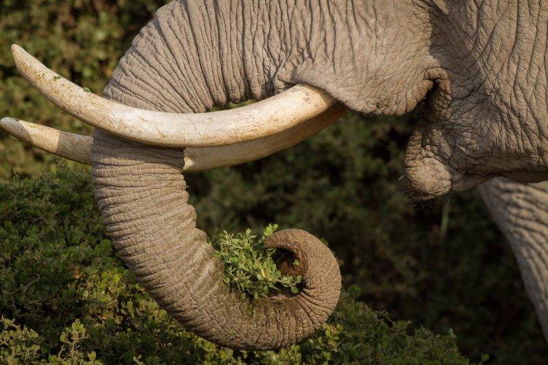British tourist killed on Thai elephant trek
