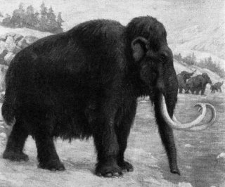 //cdnph.upi.com/sv/em/i/UPI-1791392226685/2014/1/13922302857425/Giant-mammoth-tusk-discovered-at-Seattle-construction-site.jpg