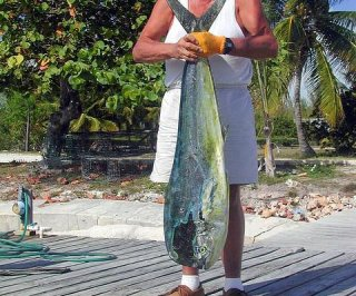 http://cdnph.upi.com/sv/em/i/UPI-1801403543988/2014/1/14035462972063/Mahi-mahi-exposed-to-BP-oil-spill-swim-slower.jpg
