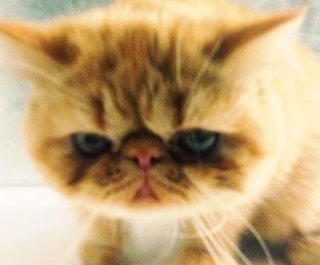 http://cdnph.upi.com/sv/em/i/UPI-2011371501610/2013/1/13715035394125/Justin-Biebers-cat-Tuts-has-his-own-Twitter-account.jpg