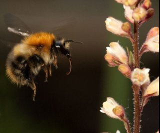 //cdnph.upi.com/sv/em/i/UPI-25471371844274/2013/1/13718429299153/Thousands-of-bumblebees-die-in-Oregon-following-pesticide-spraying.jpg