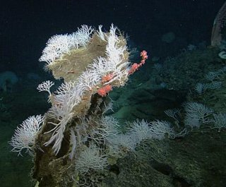 http://cdnph.upi.com/sv/em/i/UPI-3351397571873/2014/1/13975754185957/Biologists-detail-four-new-deep-sea-killer-sponges.jpg
