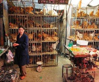 http://cdnph.upi.com/sv/em/i/UPI-3591390928431/2014/1/13909308021716/Hong-Kong-to-cull-20000-chickens-after-testing-positive-for-H7N9.jpg