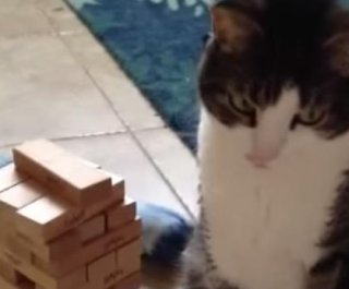 http://cdnph.upi.com/sv/em/i/UPI-3591401322238/2014/1/14013235987326/Jenga-cat-is-better-at-game-than-most-humans-VIDEO.jpg