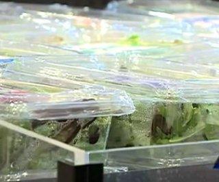 http://cdnph.upi.com/sv/em/i/UPI-3781375280591/2013/1/13752831972713/Bagged-salad-behind-cyclospora-outbreak.jpg