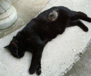 http://cdnph.upi.com/sv/em/i/UPI-41111340222533/2012/1/13402228651460/Cat-loving-robin-returns-to-wild.jpg