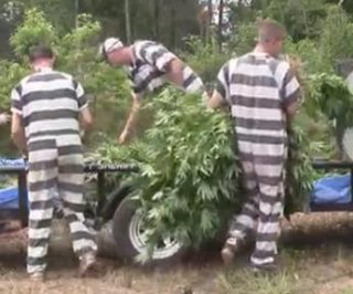 http://cdnph.upi.com/sv/em/i/UPI-4211406637511/2014/1/14066406942815/44000-marijuana-plants-discovered-on-massive-Texas-grow-operation.jpg