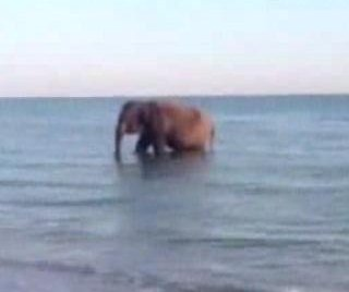 //cdnph.upi.com/sv/em/i/UPI-4781400511386/2014/1/14005115287121/Elephant-makes-appearance-at-birthday-party-on-the-beach-in-Florida.jpg