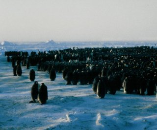 http://cdnph.upi.com/sv/em/i/UPI-5321387319211/2013/1/13873205708379/Emperor-penguin-groups-traveling-waves-maintain-optimum-insulation.jpg