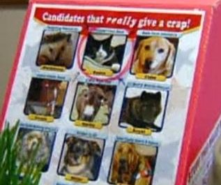 http://cdnph.upi.com/sv/em/i/UPI-5471396883516/2014/1/13968838806059/11-animals-running-for-mayor-of-Divide-in-Colorado.jpg