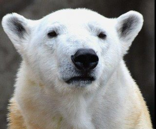 //cdnph.upi.com/sv/em/i/UPI-5631389137760/2014/1/13891380108394/Even-Chicagos-polar-bears-need-a-break-from-the-cold.jpg