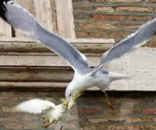 http://cdnph.upi.com/sv/em/i/UPI-5801390845007/2014/1/13908452438481/Popes-peace-doves-attacked-by-seagull-and-crow.jpg