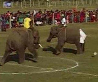 http://cdnph.upi.com/sv/em/i/UPI-6131356734433/2012/1/13567351247494/WATCH-Elephants-play-soccer-in-Nepal.jpg