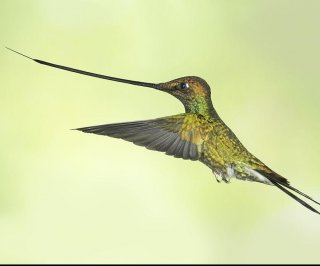 http://cdnph.upi.com/sv/em/i/UPI-6211396621845/2014/1/13966241903572/22-million-years-later-hummingbird-evolution-still-soaring.jpg