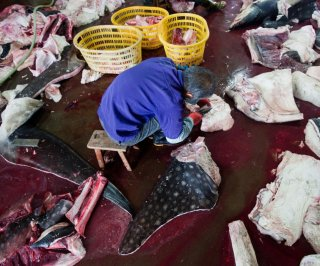 http://cdnph.upi.com/sv/em/i/UPI-6851391010972/2014/1/13910130432418/Shark-slaughterhouse-discovered-in-southern-China.jpg