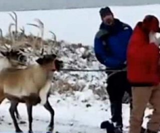 //cdnph.upi.com/sv/em/i/UPI-6951386595641/2013/1/13865959492907/Reindeer-recovered-after-escaping-from-Santa-during-lighting-ceremony.jpg