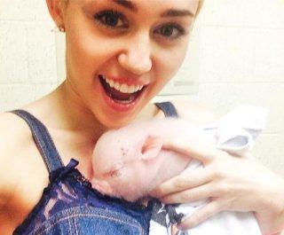 http://cdnph.upi.com/sv/em/i/UPI-7001407784952/2014/1/14077871904984/Miley-Cyrus-adopts-pet-piglet-Bubba-Sue.jpg