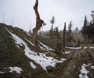 http://cdnph.upi.com/sv/em/i/UPI-71380293328573/2013/1/21381218826134/Major-Pakistani-juniper-forest-in-danger-of-vanishing.jpg