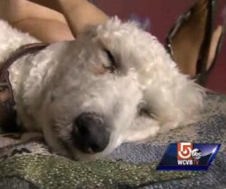 http://cdnph.upi.com/sv/em/i/UPI-7291405288243/2014/1/14053414807318/Boston-bombing-survivor-service-dog-asked-to-leave-TJ-Maxx.jpg