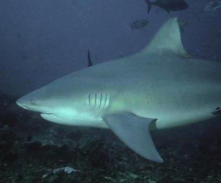 http://cdnph.upi.com/sv/em/i/UPI-7761401641898/2014/1/14016425879931/Shark-attack-victim-describes-encounter.jpg