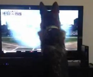 http://cdnph.upi.com/sv/em/i/UPI-8541365619777/2013/1/13656198745404/VIDEO-Baseball-loving-dog-attacks-TV-for-ball.jpg