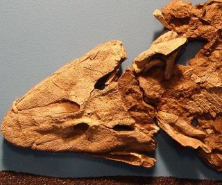 http://cdnph.upi.com/sv/em/i/UPI-8551389709374/2014/1/13897123887985/Fossil-reveals-transition-from-fins-to-feet.jpg