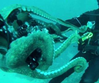 http://cdnph.upi.com/sv/em/i/UPI-8701392762110/2014/1/13927636617996/California-scuba-diver-wrestles-giant-Pacific-octopus.jpg