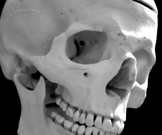 http://cdnph.upi.com/sv/em/i/UPI-8761409234255/2014/1/14092370974088/Human-skull-discovered-in-donation-bin-at-Austin-Goodwill.jpg