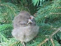 http://cdnph.upi.com/sv/em/i/UPI-87791338490210/2012/1/13384911194538/Baby-bird-found-with-2-heads-3-beaks.jpg