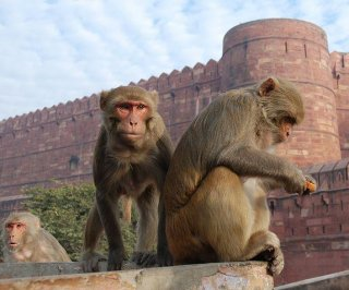 http://cdnph.upi.com/sv/em/i/UPI-8871398195772/2014/1/13758056754084/Monkey-study-explores-evolution-of-mathematic-reasoning.jpg
