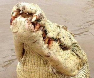 http://cdnph.upi.com/sv/em/i/UPI-9171408479374/2014/1/14084822764828/Albino-crocodile-named-for-Michael-Jackson-shot-dead-after-eating-fisherman.jpg