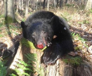 //cdnph.upi.com/sv/em/i/UPI-92311382468476/2013/1/13824730356962/Marylands-first-day-of-black-bear-hunting-season-yields-41-bears.jpg