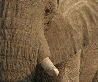 http://cdnph.upi.com/sv/em/i/UPI-9241389031964/2014/1/13824457961341/China-crushes-over-six-tons-of-illegal-ivory.jpg