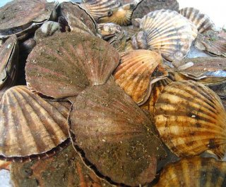 http://cdnph.upi.com/sv/em/i/UPI-9281393441719/2014/1/13934438867974/10-million-scallops-dead-in-Canada-thanks-to-overly-acidic-water.jpg
