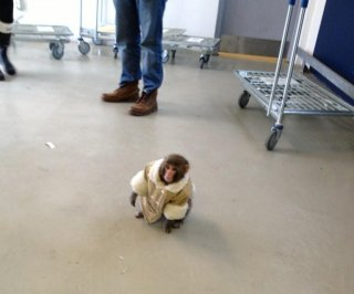 http://cdnph.upi.com/sv/em/i/UPI-93761355168610/2012/1/13551581918357/Monkey-seized-in-IKEA-parking-garage.jpg