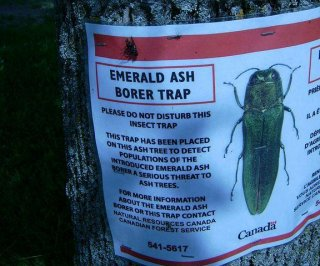 http://cdnph.upi.com/sv/em/i/UPI-9581403113040/2014/1/14031169117387/Invasive-ash-boring-beetle-nearing-New-Hampshire-border.jpg