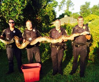 http://cdnph.upi.com/sv/em/i/UPI-9671407766526/2014/1/14077689195256/Florida-police-discover-well-fed-12-foot-python-after-residents-complain-of-missing-cats.jpg