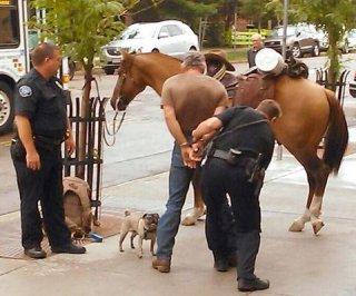http://cdnph.upi.com/sv/em/i/UPI-9741378922261/2013/1/13789241598292/Drunk-horseback-rider-arrested-600-miles-from-destination.jpg