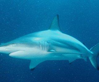 http://cdnph.upi.com/sv/em/i/UPI-9831396529572/2014/1/13965306663748/Australian-woman-taken-by-shark.jpg