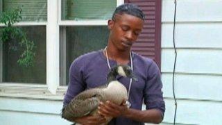 http://cdnph.upi.com/sv/em/i/UPI-98591344010032/2012/1/13440116069602/Family-adopts-stray-goose.jpg