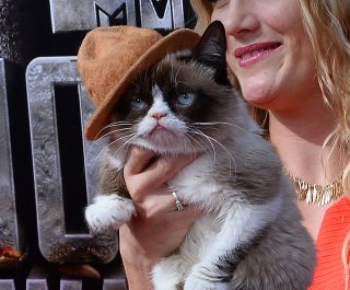 //cdnph.upi.com/sv/em/upi/UPI-2041398541650/2014/1/0657158e348fcb3be34921fdea52bf7e/Grumpy-Cat-makes-appearance-on-Idol-VIDEO.jpg