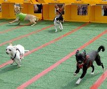 http://cdnph.upi.com/sv/em/upi/UPI-2321392733214/2014/1/e4ea8c18f6c2b30a8c3d8219886012bc/Chihuahuas-are-running-wild-in-Arizona.jpg