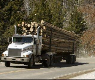 lumber liquidator