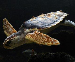 http://cdnph.upi.com/sv/em/upi/UPI-6611406556857/2014/1/98a75a3fb86fa802f62e97f9220f5201/Web-cams-show-loggerhead-turtles-hatching-in-Florida.jpg
