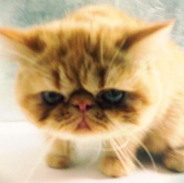 Justin Bieber's cat, Tuts, has his own Twitter account