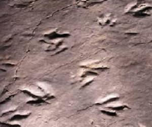 Park wants to display more dino tracks