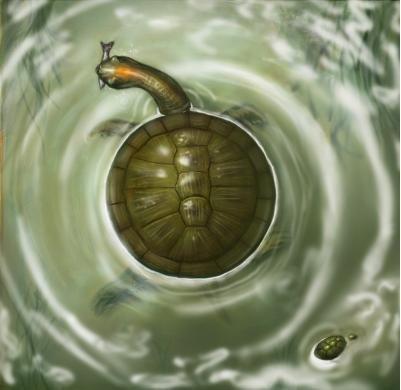 Round turtle